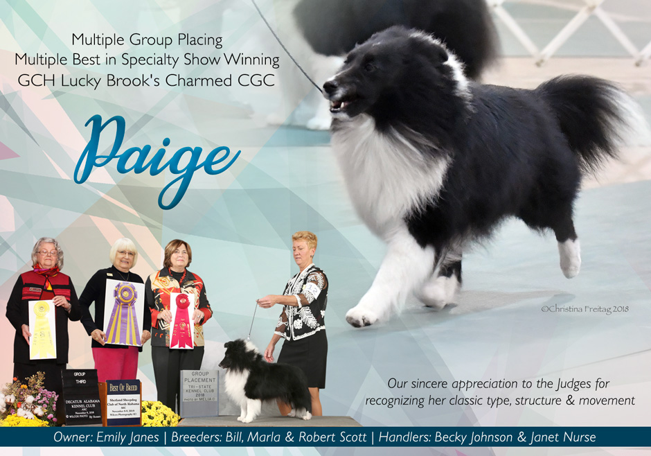 AKC Weekly Winners Gallery – List View